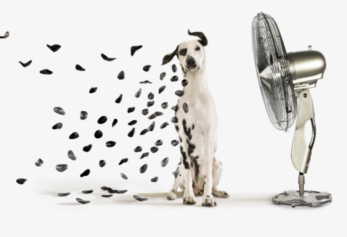 Dog Loves Fan