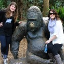 Take A Walk On The Wild Side With The Zoo Atlanta Animals