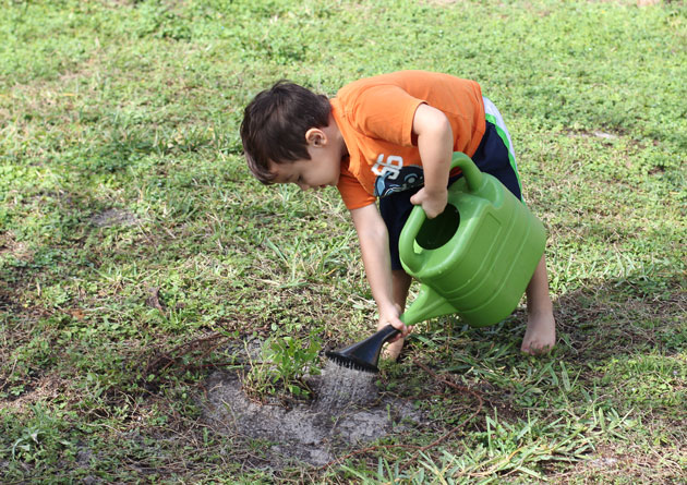 Watering Ground Cover